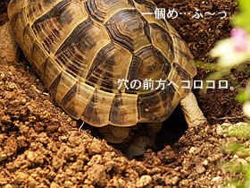 070407_jyubei07.jpg