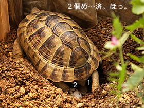 070407_jyubei12.jpg
