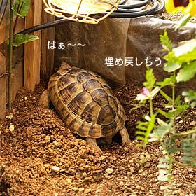 070407_jyubei16.jpg