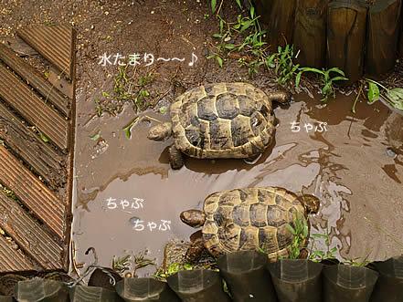 070906_taifu6.jpg