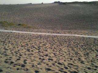 中田島砂丘1