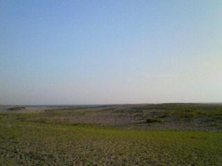 中田島砂丘に緑?