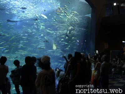 新江ノ島水族館-水槽