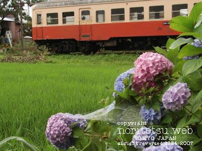 小湊鉄道 里見 紫陽花