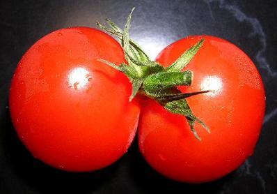 twin-tomato.jpg