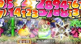 Maple0001@.jpg