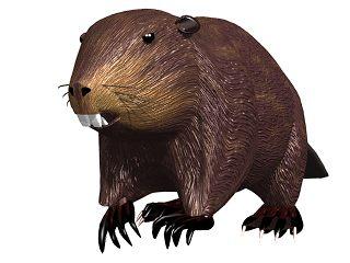 beaver_03.jpg
