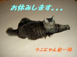 お休み。。。