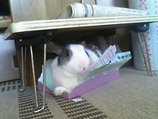 はちきれそうな箱