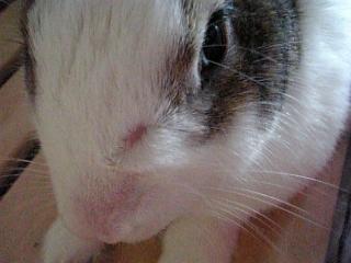 お鼻のハゲ