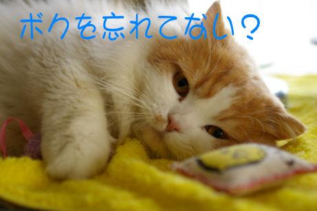 IMGP2553ー猫