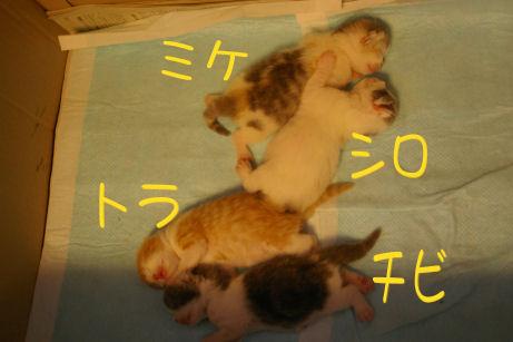 IMGP2842ー猫