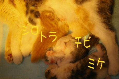 IMGP2908ー猫
