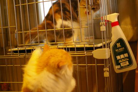 IMGP2944ー猫
