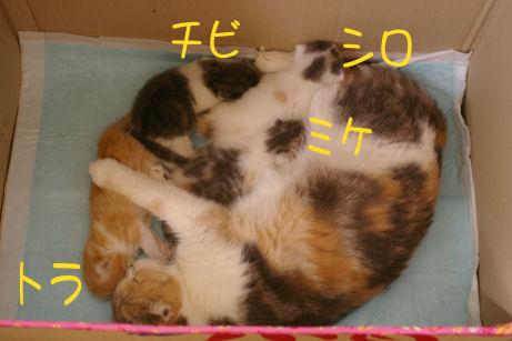 IMGP2983ー猫