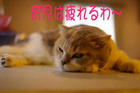 IMGP2956ー猫