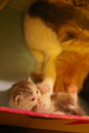 IMGP3382ー猫