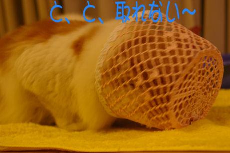 IMGP3179ー猫