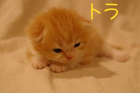 IMGP3462ー猫