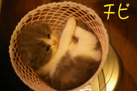 IMGP3813-猫