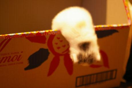 IMGP3941ー猫