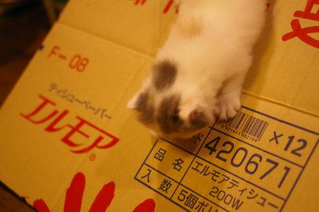 IMGP4098ー猫