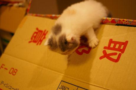 IMGP4097ー猫