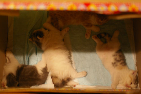 IMGP4133-猫