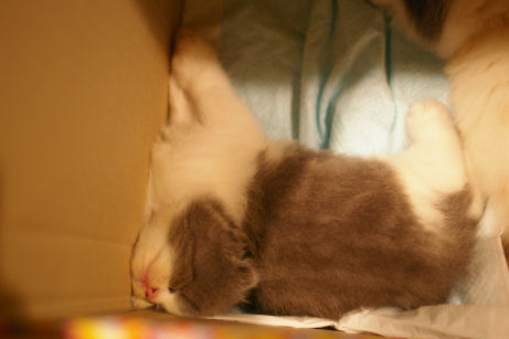IMGP4136ー猫
