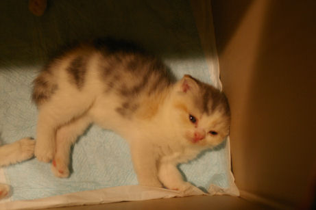 IMGP4135ー猫