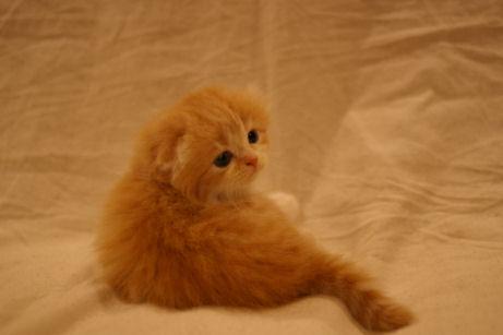 IMGP4185ー猫