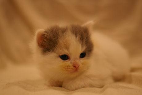 IMGP4223ー猫