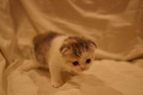 IMGP4192ー猫