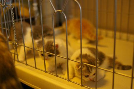 IMGP4153ー猫
