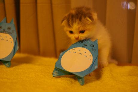 IMGP4252ー猫