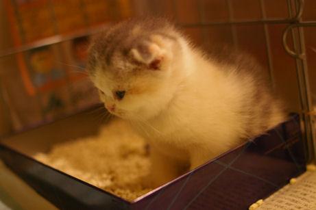 IMGP4265ー猫