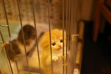 IMGP4230ー猫