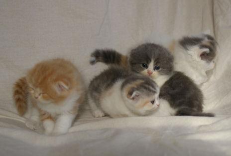 IMGP4357ー猫