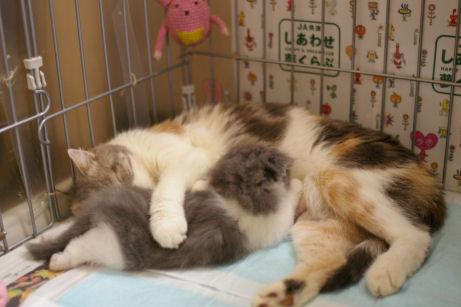 IMGP4354ー猫