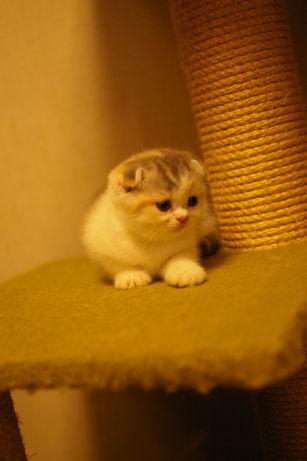 IMGP4537ー猫