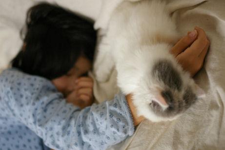 IMGP4544-猫
