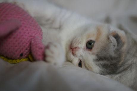 IMGP4590ー猫
