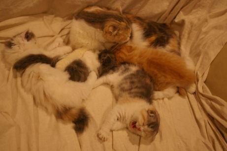 IMGP4651ー猫