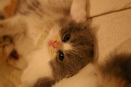 IMGP4654ー猫