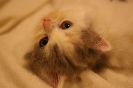 IMGP4655ー猫