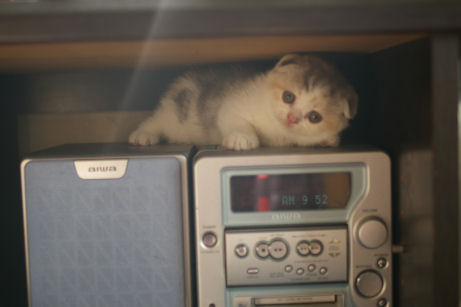 IMGP4691-猫