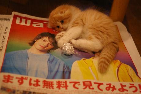IMGP4757ー猫