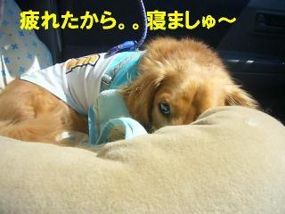 疲れたから寝ます!