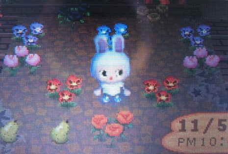 ハートの花壇にハウル参上!