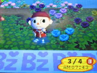 ついに5本目の青いバラ